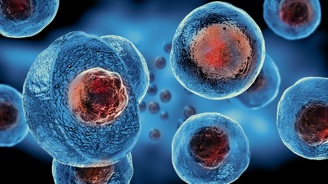 Cellule staminali riparatrici