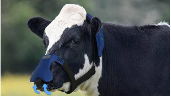Una maschera per vacche per ridurre il metano